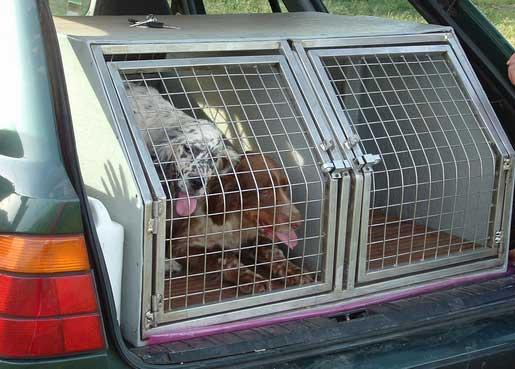 Caisse de transport chien de chasse